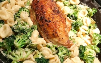Creamy Shells with Chicken and Broccoli Recipe